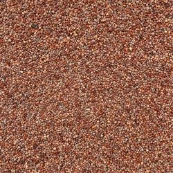 Radish Sprouting Seed ORGANIC - 4oz